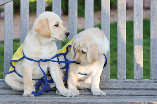 service-dogs-2